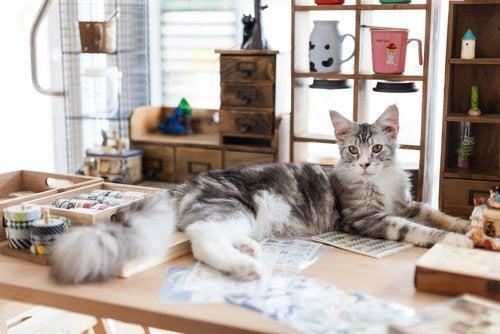 5 böcker om katter som du definitivt kommer att älska