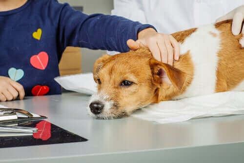 Utbilda dig till en djurassisterad interventionstekniker!