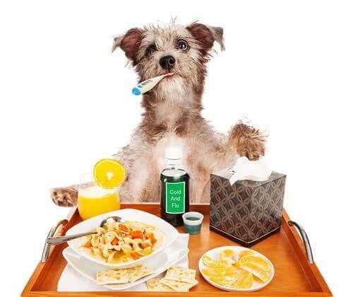 En hund sitter framför ett frukostbord med en termometer i munnen.
