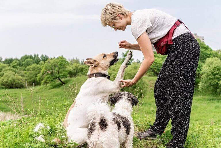 Kvinna tränar sin hund att skaka tass.