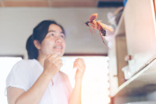 En kackerlacka flyger framför en rädd kvinna.