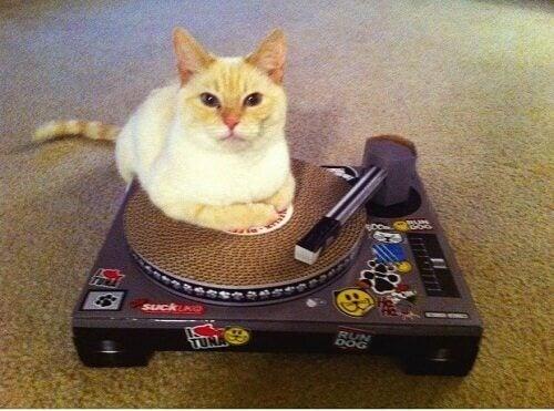 Katt låtsas vara DJ.
