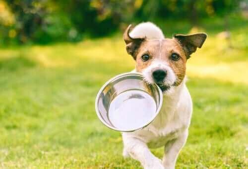 Hund med matskål i munnen.