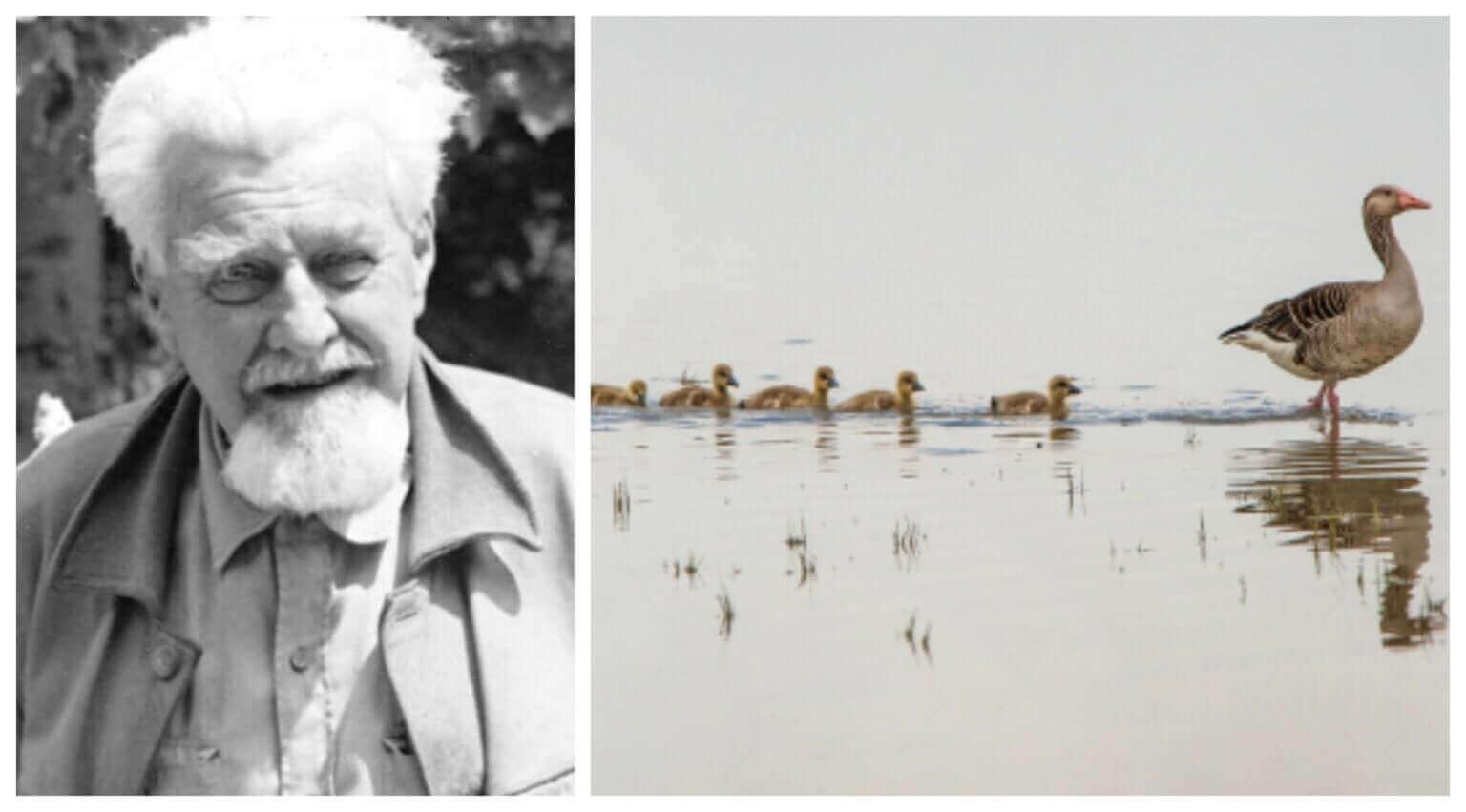 Zoologen Konrad Lorenz och hans studier av djurens beteende