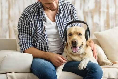 Hundar älskar rockmusik, enligt experter