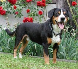 nätverk som hjälper hundar: hund i trädgård