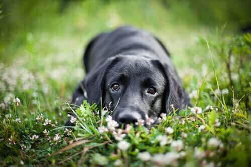 Upptäck de stumma hundarna i Sydamerika