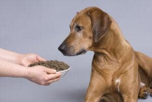 hund blir erbjuden hemlagad mat