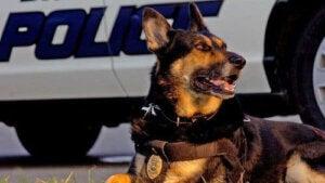 polishund
