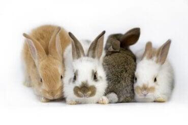 Allt om vestibulärt syndrom hos kaniner