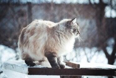 Ha kul med vinterälskande hundar och katter