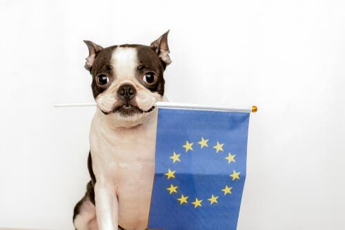 Europeiska konventionen för skydd av husdjur