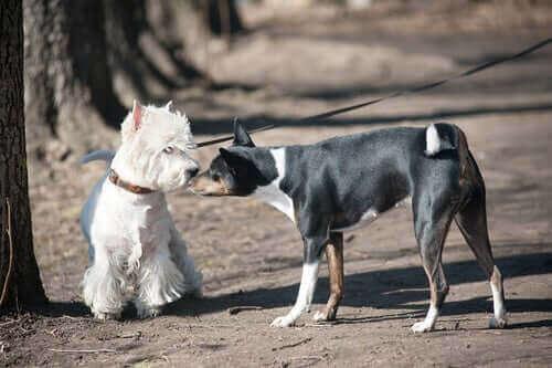 En hund nosar på en annan hund.