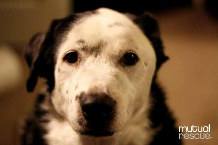 Hur en hund räddade sin ägares liv: från övervikt till hälsosam