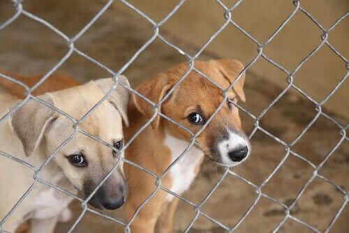 Hundar bakom galler på djurskydd.