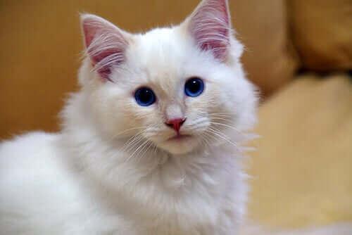 Katter tycker om sällskap: Inte så självständiga som man tror