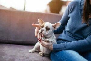 kvinna hälsar på en hund
