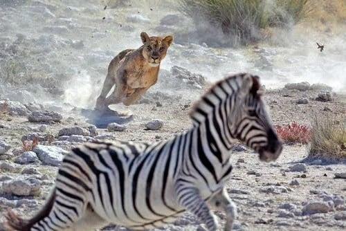 Naturligt urval och anpassning i djurvärlden