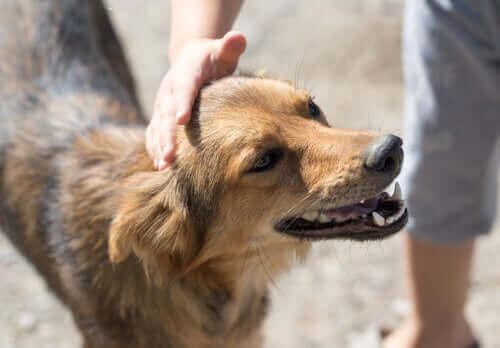 Adoptera en hund i din stad: hur går det till?