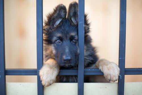 Lurvig hund väntar på att bli adopterad.