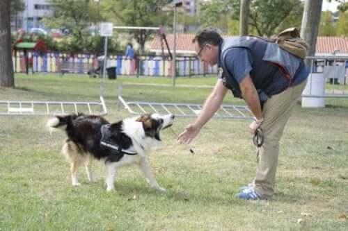 Albatrox tränar med sin ägare.