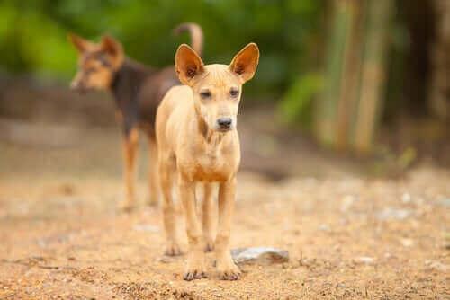 En hyllning till de övergivna hundarna i Mexiko