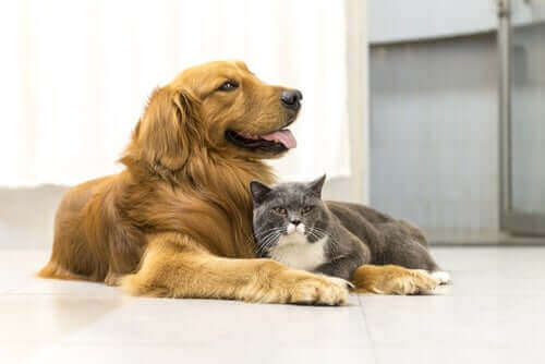 Djur är kännande varelser, inte föremål