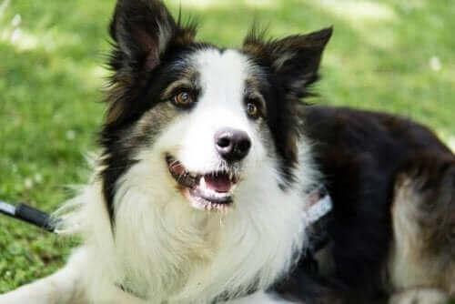En hund kan upptäcka gifter i mat: räddar andras liv