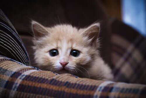 Rädd katt sitter på en filt.
