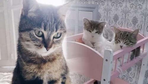 3 kattungar från Kattarshians sitter i sovrummet.