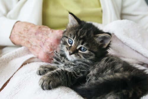 En kattunge ligger på en äldre persons knä.