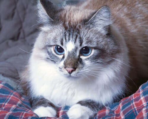 När din katt kräks: vet du vad du bör göra?