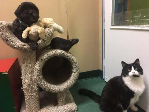 Vänskap mellan arter: en katt, en hund och en råtta