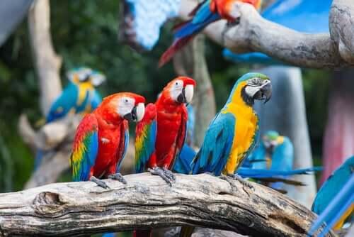 En grupp aror sitter på en gren.
