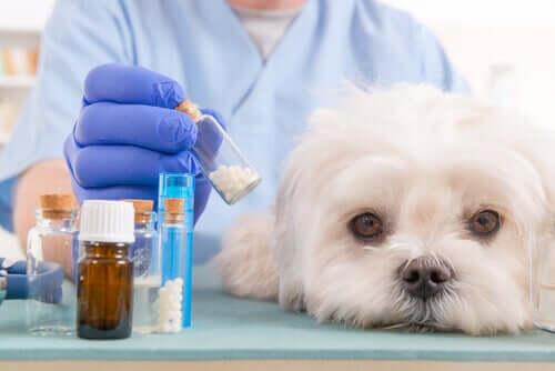 Hund på besök hos veterinären.