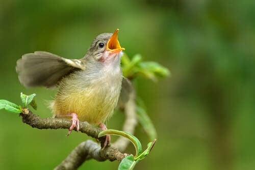 Lär dig hur du identifierar fågelsång och fågelläten hemifrån