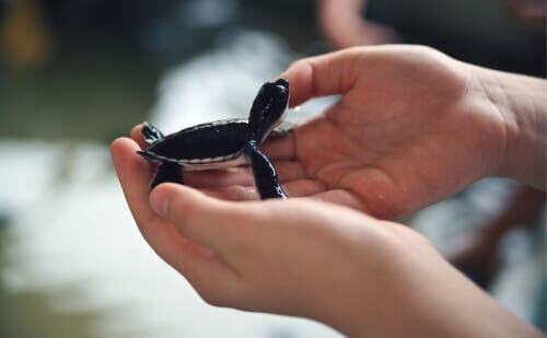 Prägling och räddade djur - chanser att överleva