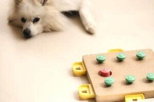 hund med leksak som kan stimulera hjärnan