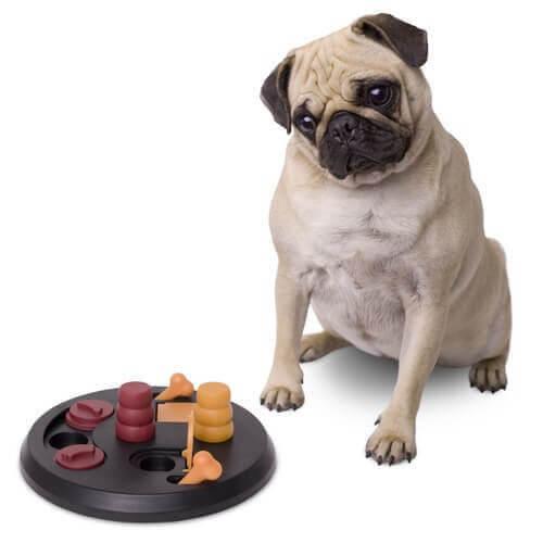 Lekar som hjälper en hund att stimulera hjärnan