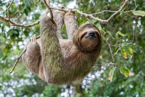 Kan djur uppleva tidens gång?