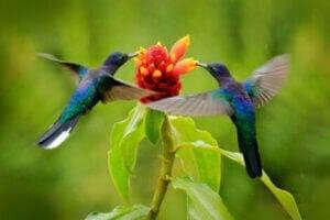 kolibrier och hur djur upplever tidens gång