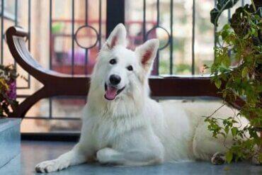 Husdjur på balkongen - säkerhetsåtgärder du bör vidta