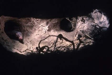 En mus i underjordiska tunnlar.