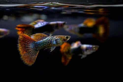 Vikten av att ha rätt pH i ett akvarium