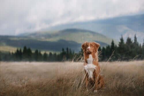 En hund på ett fält.