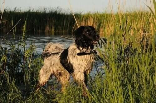En hund står bredvid en sjö.