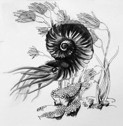 Målning av hur en ammonit såg ut när den levde.