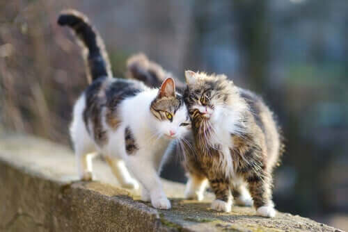 Två katter kelar med varandra.