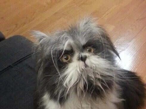 Märkligt djur på Twitter- är det hund eller katt?