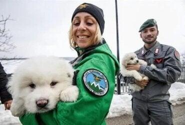 Tre valpar räddades från lavin i Italien
